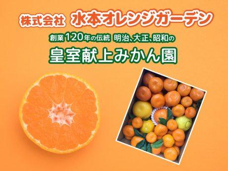 みかん詰め合わせセット|株式会社水本オレンジガーデン