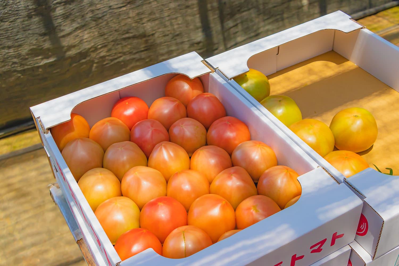 【熊本県産】玉名の隆唐トマト 2kg